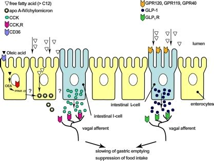 Activated protein c in sepsis a critical review